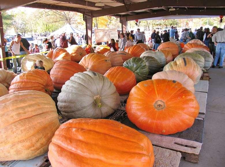 6th Annual Saratoga Giant PumpkinFest